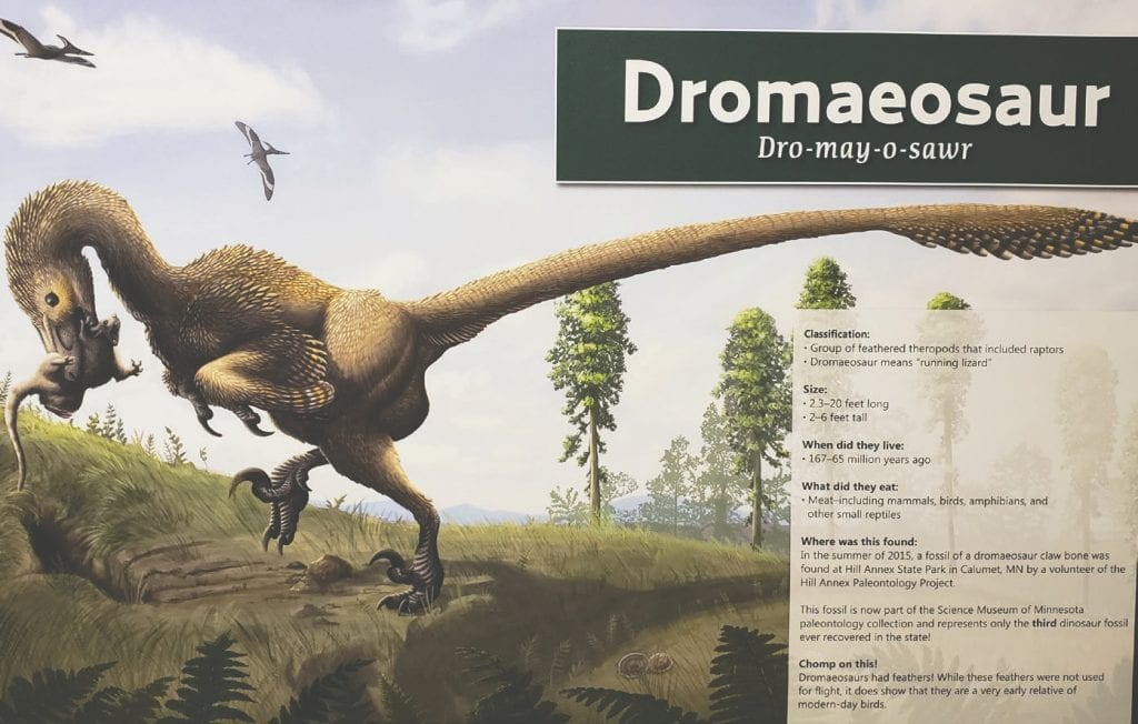 The fossil of a dromaeosaur claw bone was found at Hill Annex State Park in Calumet. The fossil is now part of the Science Museum of Minnesota paleontology collection. Dromaeosaurs had feathers and were a very early relative of modern-day birds.