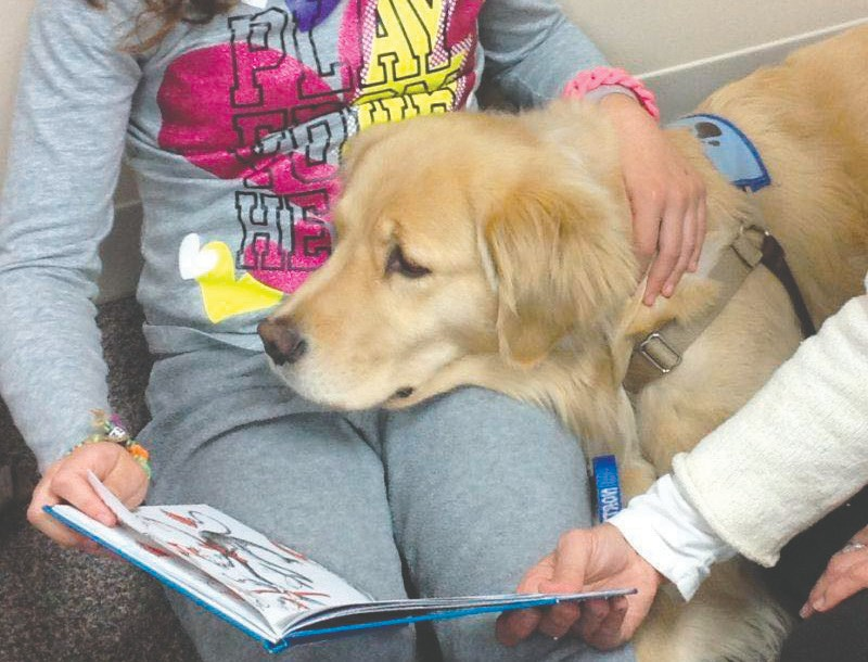 """Read to a Breed"" a new activity at the fair will give children the opportunity to read to attentive dogs, cats, rabbits and other breeds of North Star Therapy Animals."