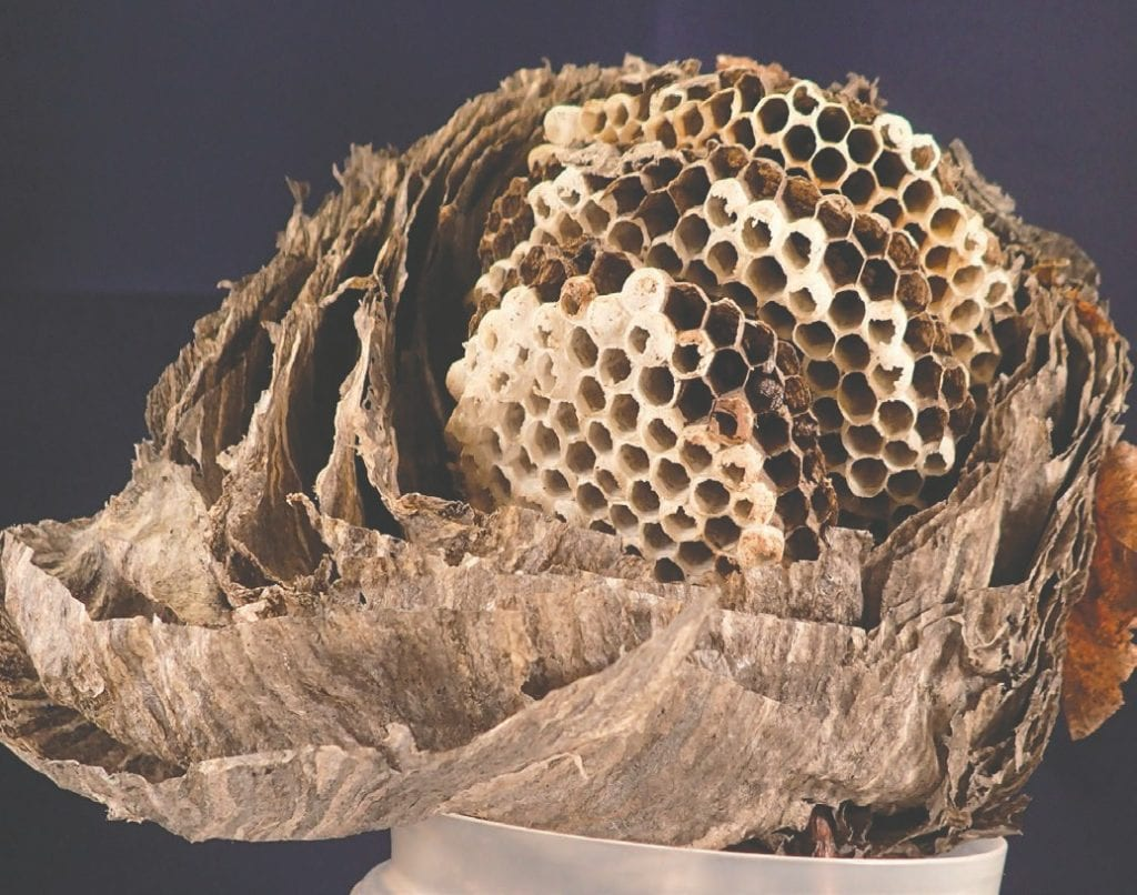 The interior of the nest of bald-faced hornets. Submitted photo.