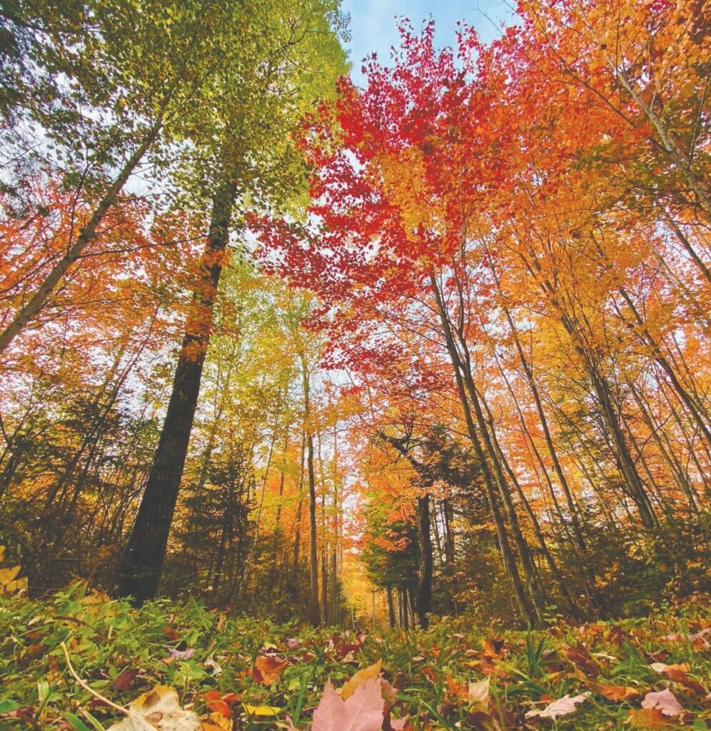 Things are looking up this fall! Photo by Kallie Kantos/Perceptions Photography, International Falls.