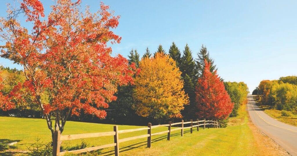 A country road near Hibbing. Photo by Cheryl Carlson, Virginia.