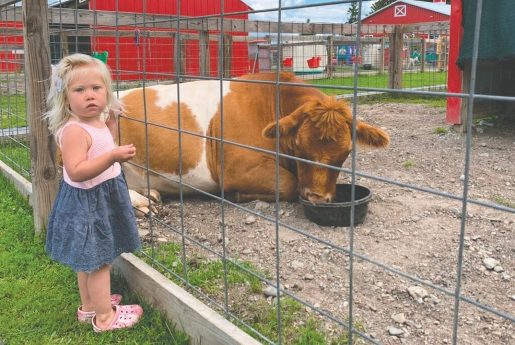 Lucy marvels at this cow on the farm. However, she referred to every animal on the farm as a cow and would moo at them.