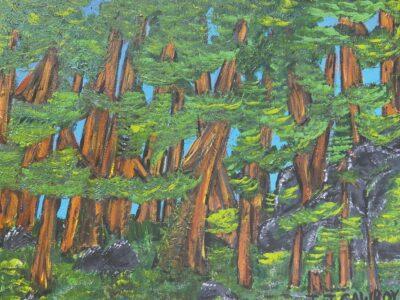 Exhibit highlights Ancient Cedars Trail