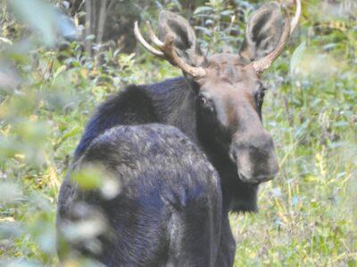 Fall foliage and a rare moose sighting made Carol's day