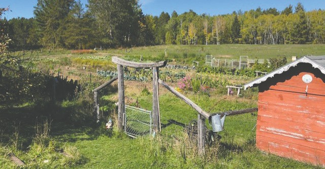 Pictured here is the one-acre fenced garden where Becky has recently harvested broccoli and two beautiful cauliflower heads.