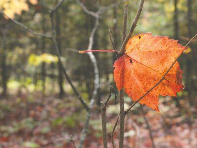 Don't leaf me hanging!